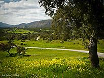 La Dehesa: biodiversity refuge