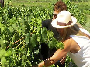 Vin, gastronomie et tours humaines