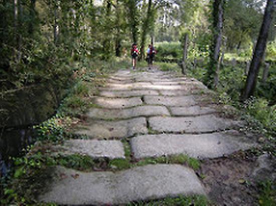 Camino Francés Standard con guia