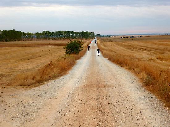 La Meseta en el Camino Francés