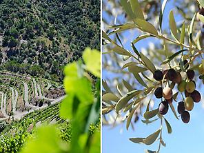 Trip to the Priorat oil's world