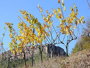 A taste of the Priorat