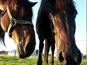 HORSEBACK RIDE VALENCIA