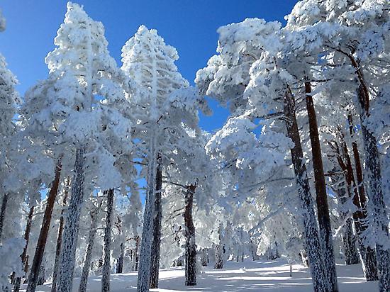 Guadarrama National Park in winter.