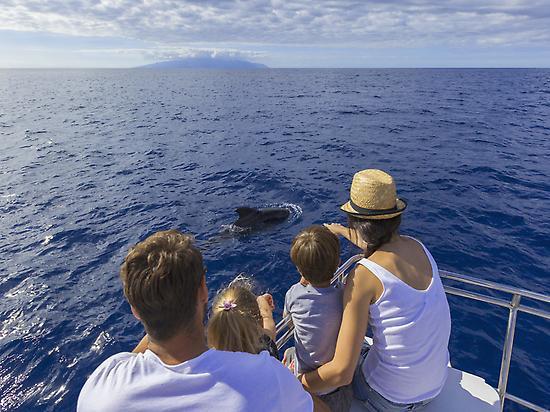 Viendo ballenas y delfines.