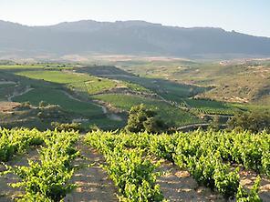Paisaje de viñedos en Rioja Alavesa