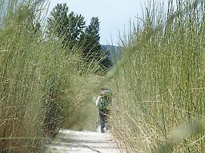 Etapa Zubiri-Pamplona