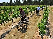Ridding thorugh the vineyard