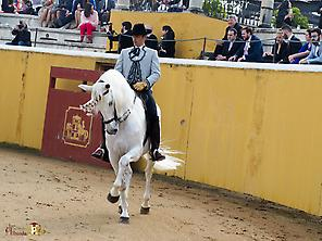 Andalusian show