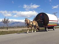 Caravan of Horses-Villanueva de la Vera