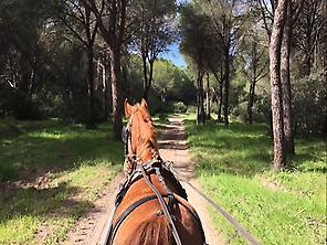 Doñana in horse-drawn carriage