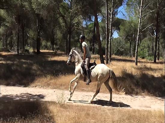 Horses in Doñana (Huelva)
