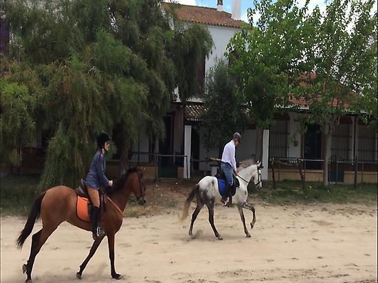 Galloping on horses in El Rocio (Huelva)