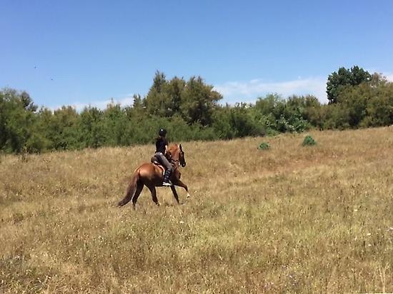 Horse trailriding in El Rocio (Huelva)