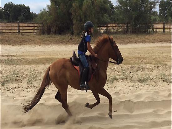 Trailriding on horse in El Rocio(Huelva)