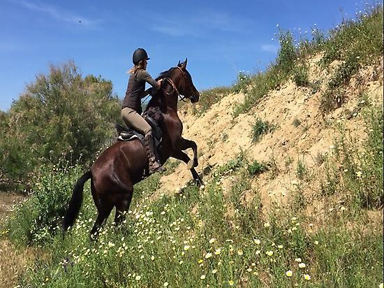 Horseriding in El Rocio (Huelva)