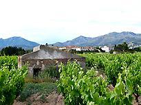 vineyard and bunker