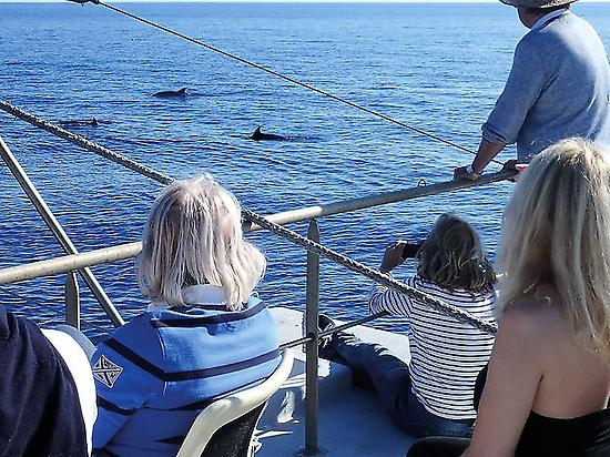 Avistamiento de delfines