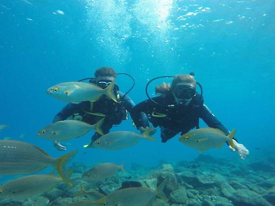 Discover scuba diving in Los Cristianos,