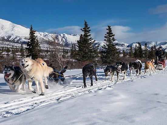 Individual nordic dogs sled in Partacua