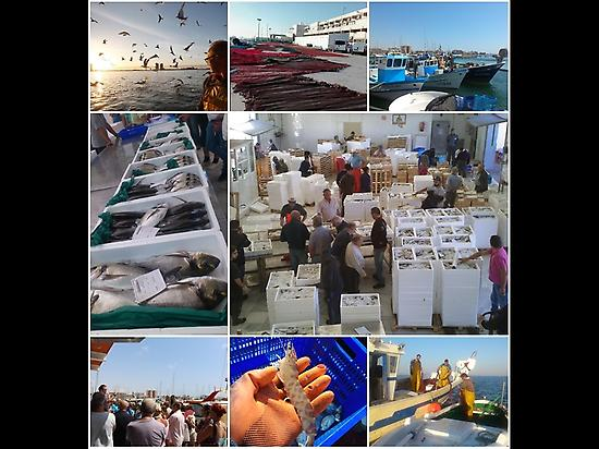 MARINE AND GASTRONOMIC TOURS