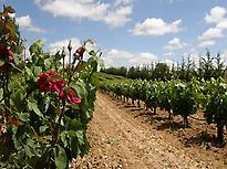 Rutas de Vino - Vintage Spain