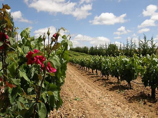 Vintage Spain - Rutas de Vino