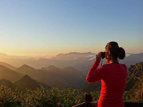 Looking for birds from a view point