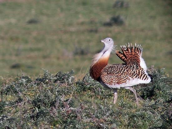 Birdwatching Los Llanos