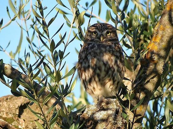 Birdwatching over los Llanos
