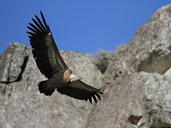 Birding in Sierra de San Pedro