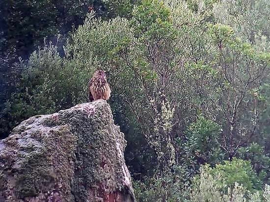 Birding experience Sierra de San Pedro