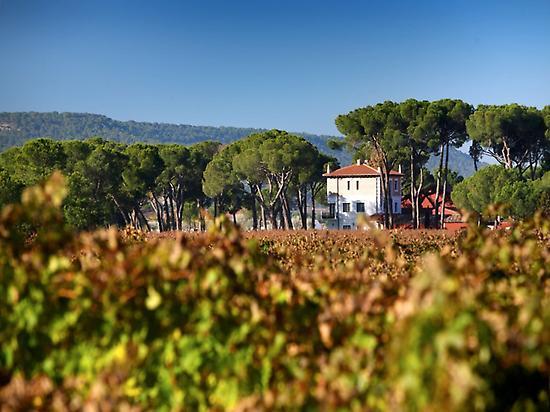 Vineyards of Finca Villacreces.