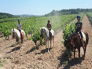 Riding through vineyards