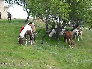 Horses also rest for a while