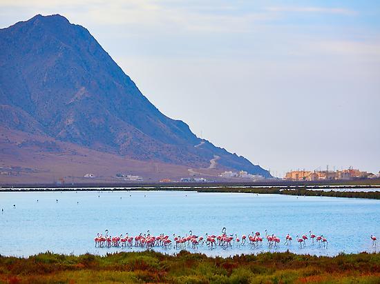 Flamingos Salinas Cabo de Gata - Níjar