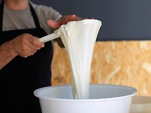 Process of making mozzarella