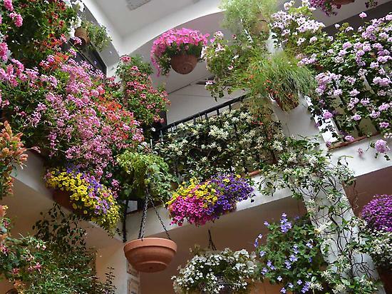 Flowers in Patios
