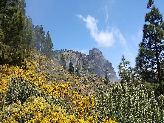 Pico de las nieves, El pico mas alto.