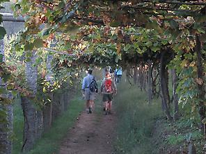 Walking through the vineyards