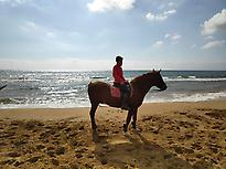 HORSE AT THE BEACH OF CABLANQUE