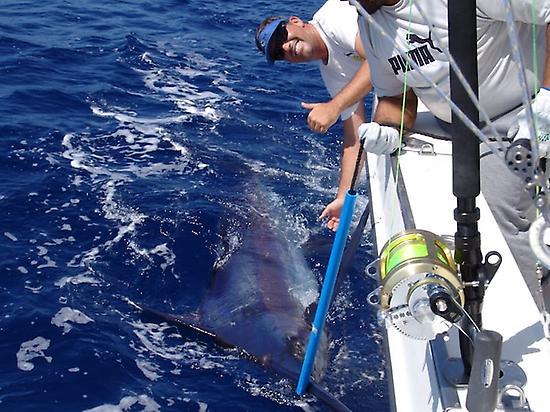 pesca marlin