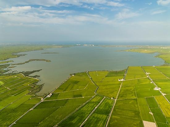 Albufera lake and Rice fields in summer.