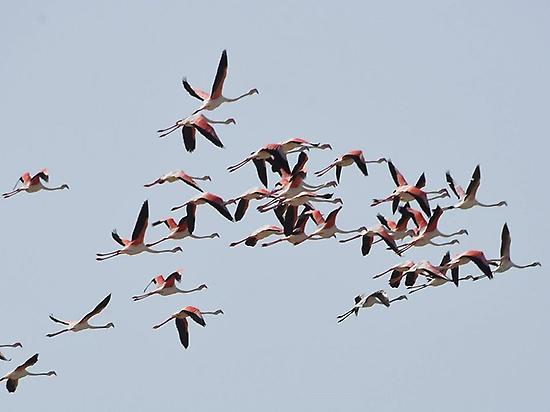 La Albufera es el paraíso para aves .
