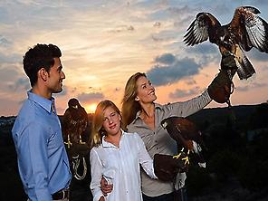 International School of Falconry