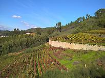 O Ribeiro Vineyards