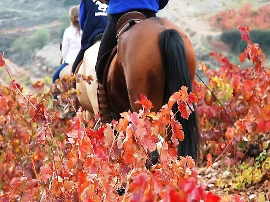 Wine tourism and Horse