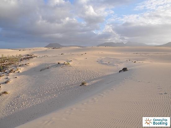 Sand dunes in Corralejo