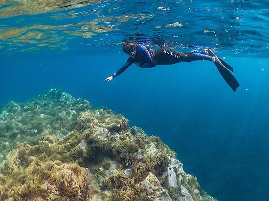 Snorkel with Oceanológico.