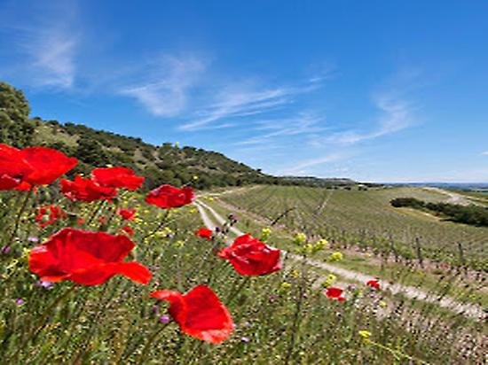 Quinta Sardonia vineyard